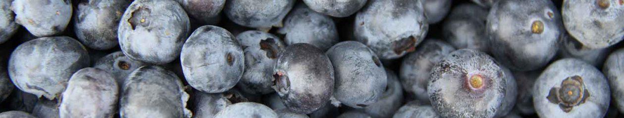 Viforsa, Vivero ornamental, forestal y de frutos del bosque