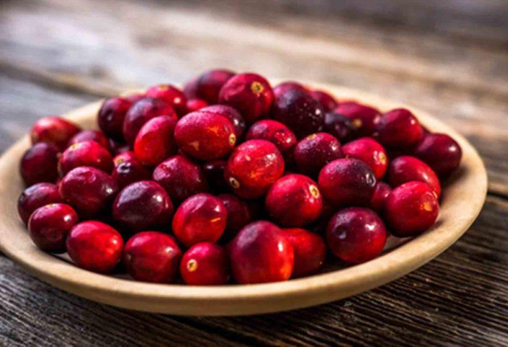 Plantas de arandanos rojos. Vivero de arándano en Galicia.
