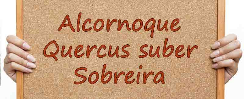 alcornoque quercus suber