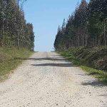 Plantaciones de eucaliptos. Como evitar las multas: ¡ojo!, de 1.001 a 100.000 €