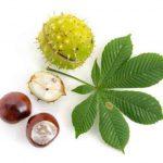 Castaño de Indias, un gran árbol con flores y buena sombra para cobijarte