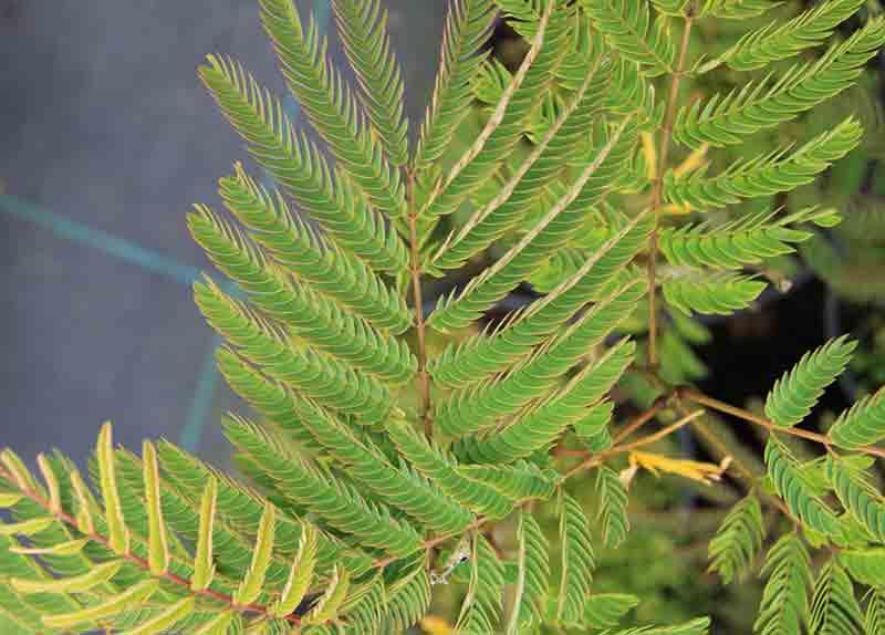 Rboles archivos vivero online plantas online viforsa for Vivero tu jardin