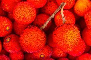 Madroño, Arbutus unedo. ¿Probaste el fruto del madroño?