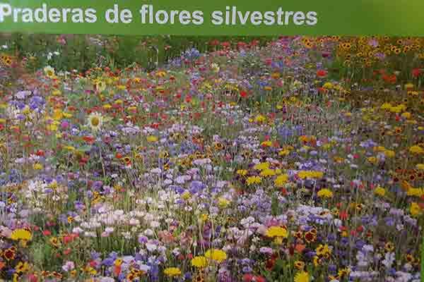 praderas de flores