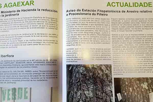 revista de jardineria procesionaria del pino
